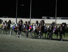Projects Harness Racing